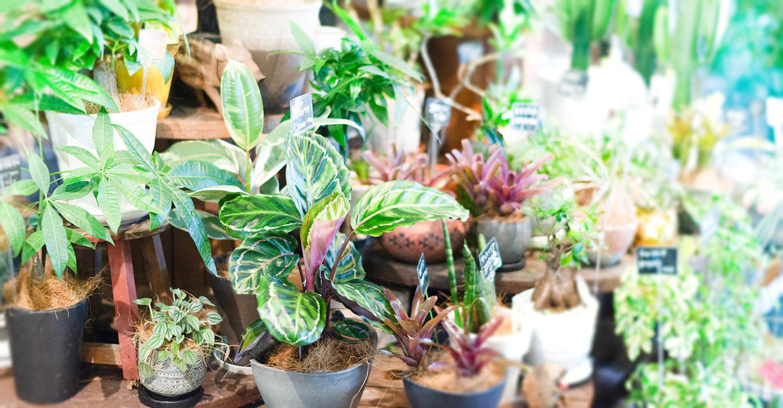 葉物の観葉植物
